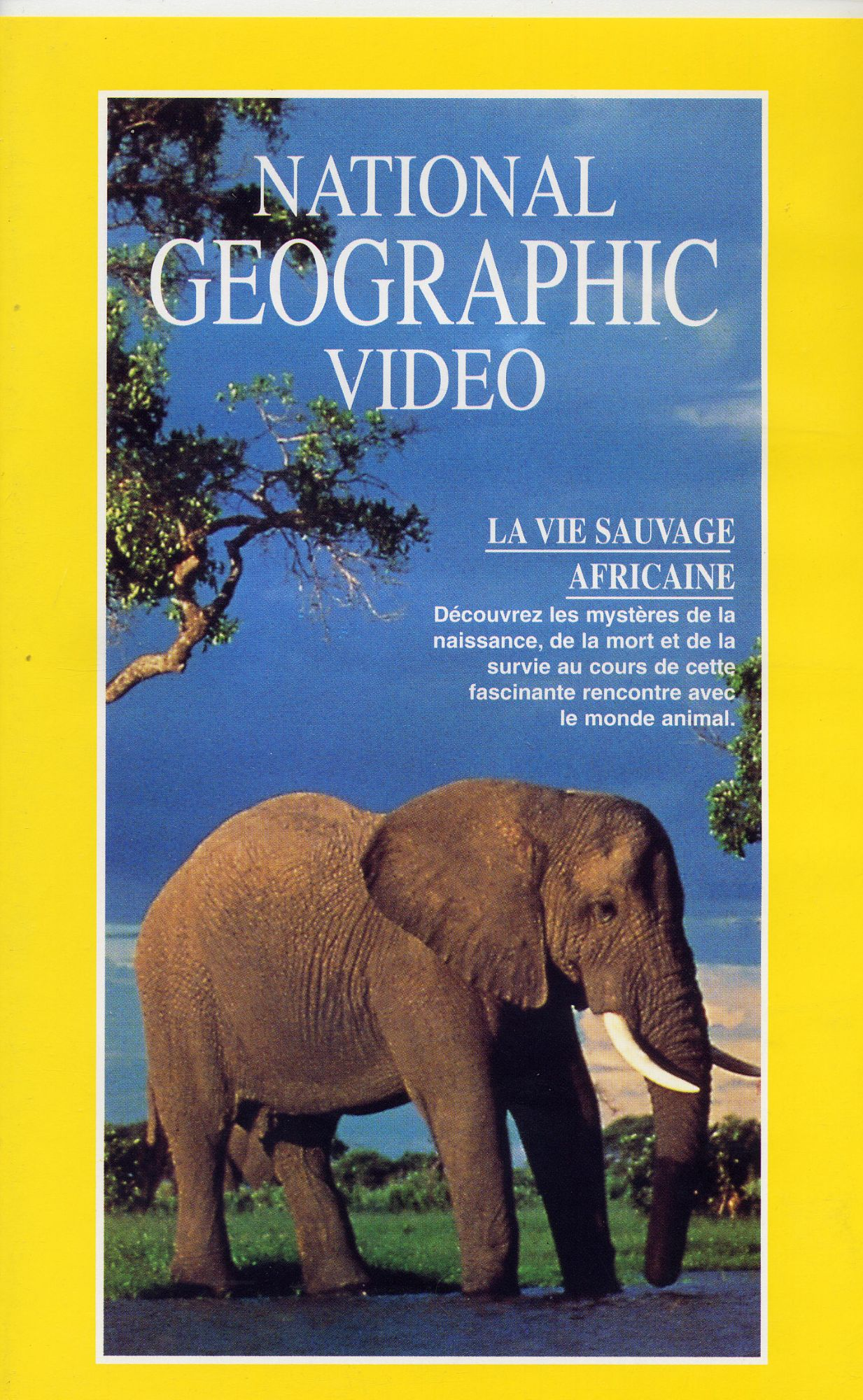 National Geographic Video - La Vie Sauvage Africaine 0999